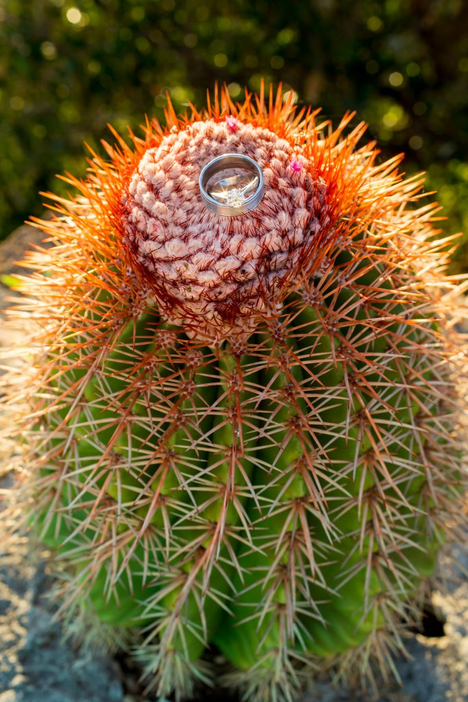 Detailed photo of wedding rings sitting on a cactus for Antigua destination wedding