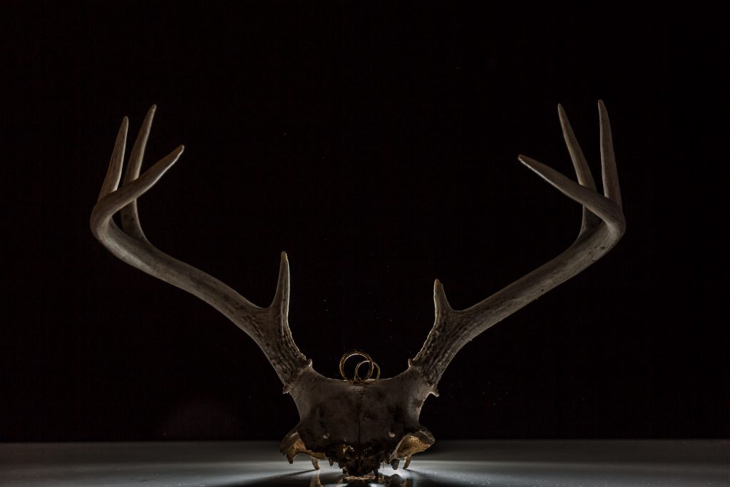 wedding ring detail photo with antlers